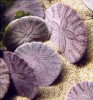 10 Interesting Sand Dollar Facts