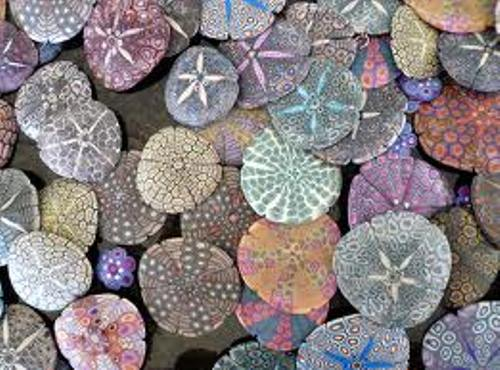 Sand Dollar In Colors