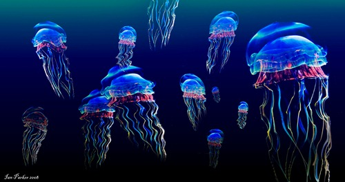 Small Jellyfish