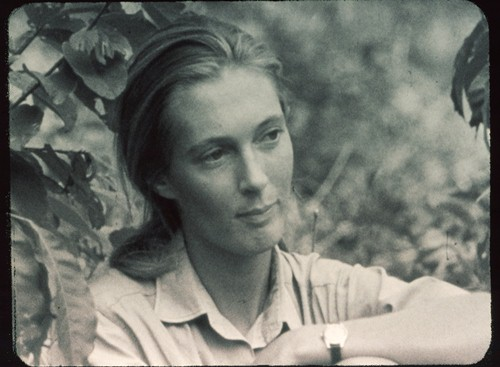 Young Jane Goodall