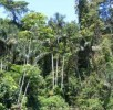 10 Interesting Rainforest Facts