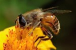 10 Interesting Bee Facts