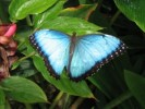 10 Interesting Butterfly Facts