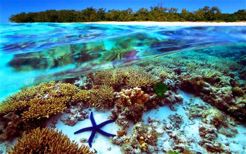 Great Barrier Reef Scene