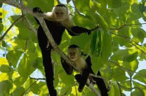 Monkeys in Rainforest
