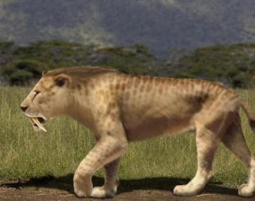 Powerful Saber Tooth Tiger