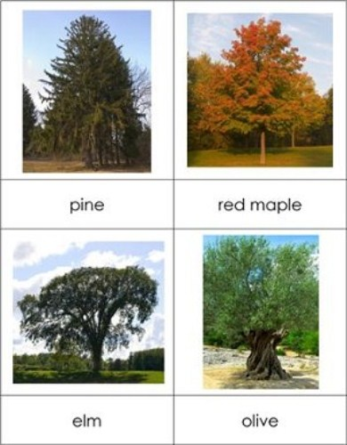 10 interesting trees facts my interesting facts for Garden trees types