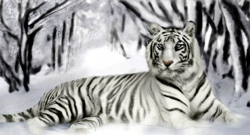 White Tiger Facts