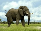 10 Interesting Elephant Facts