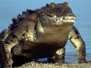 10 Interesting Crocodile Facts