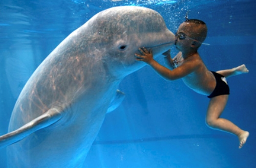 Beluga Whale with Kid