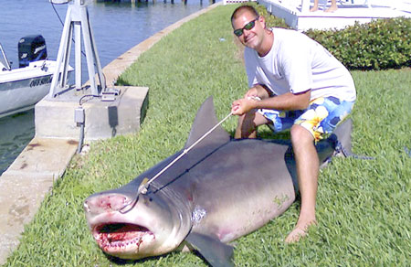 Bull Shark Hunter