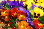10 Interesting Plant Facts