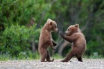 10 Interesting Grizzly Bear Facts