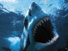 10 Interesting Shark Facts