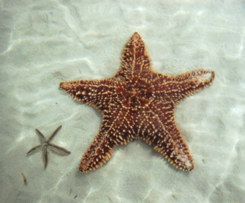 Small and Big Starfish