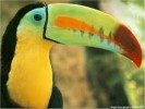 10 Interesting Toucan Facts