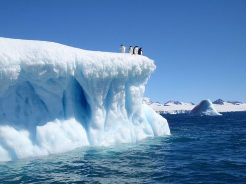 Antarctica and Penguin