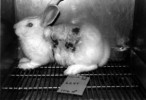 10 Interesting Animal Testing Facts
