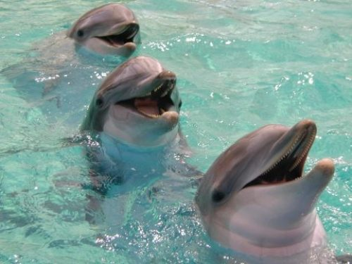 bottlenose dolphins facts