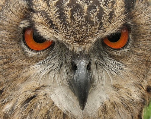 Birds of Prey's Eyes
