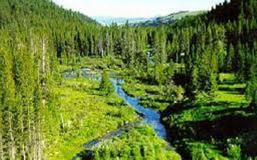 10 Interesting Coniferous Forest Facts My Interesting Facts