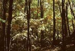 10 Interesting Deciduous Forest Facts