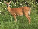 10 Interesting Deer Facts