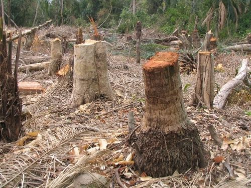 Deforestation Impact