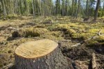 10 Interesting Deforestation Facts