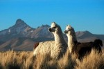 10 Interesting Chile Facts
