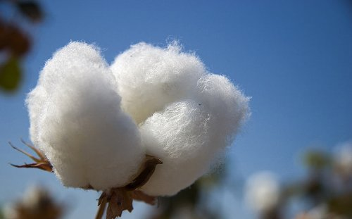 Cotton facts