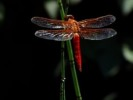 10 Interesting Dragonflies Facts