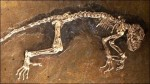 10 Interesting Fossil Facts