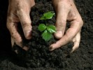 10 Interesting Fertilizer Facts