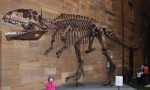 10 Interesting Giganotosaurus Facts