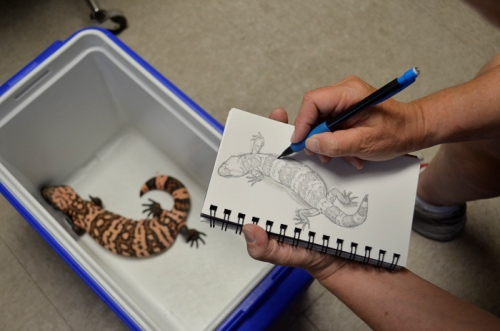 Gila Monster Pic