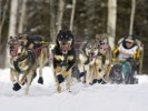 10 Interesting Iditarod Facts