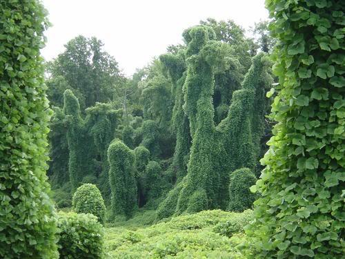 Kudzu Facts