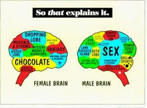 Male Brain Image