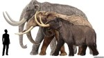 10 Interesting Mammoth Facts