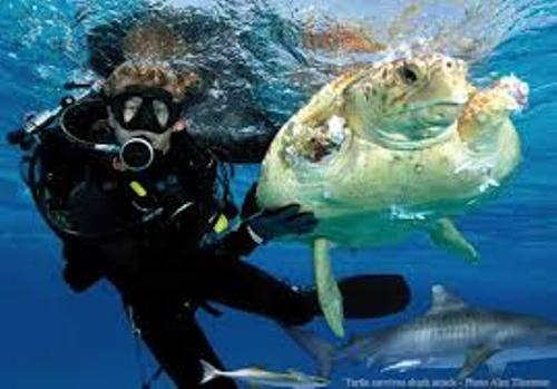10 Interesting Marine Biologist Facts | My Interesting Facts