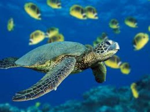 Marine Biome Turtle