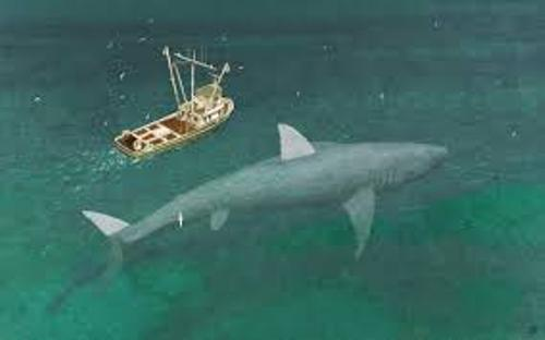 10 interesting megalodon facts my interesting facts
