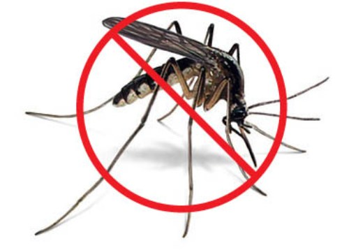 Mosquito Images