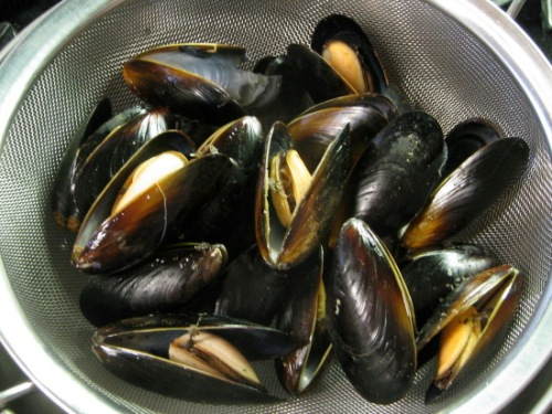 Mussel Facts