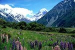 10 Interesting New Zealand Facts
