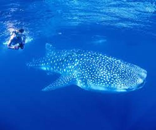Ningaloo Reef Tourist