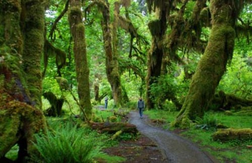 Olympic National Park Trail