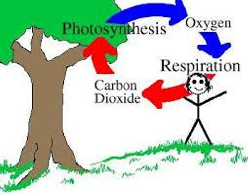 importance of photosynthesis to humans Importance of phytoplankton the food web  through photosynthesis, phytoplankton consume carbon dioxide on a scale equivalent to forests and other land plants.